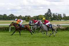 Race for 3-year-old Arabian horse group II on 5 September 2015 in Wroclaw, Poland. Stock Photos