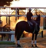 racehorse Obrazy Stock