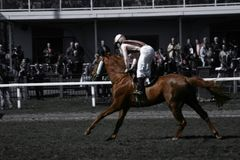 Racehorse. A galloping horse off to the finish Stock Photos