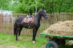 racehorse Royaltyfri Bild