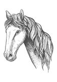 Racehorse of appaloosa breed sketch symbol. Purebred racehorse graceful profile with sketched head of appaloosa mare with slender neck and long wavy mane. May be Stock Photos