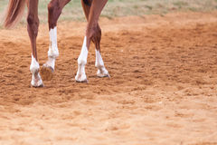 Racehorse Feet Close Up. 4 Legs and feet of a Horse on the Newmarket gallops stock photos