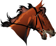 Racehorse head Stock Photos