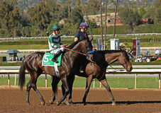 Racehorse and Jockey Stock Photo