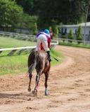 A racehorse and jockey in a horse race.  Stock Photos