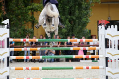 Racehorse jumping over obstacles on a show jumping competition Royalty Free Stock Photo