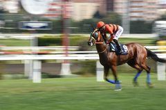 Racing Horse in Competition Motion Pan. Racehorse racing horse racing horse racing race track race track jockey paddock gambling equestrian gamble sport Royalty Free Stock Images
