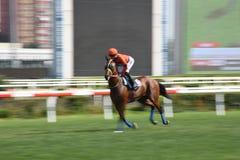 Racing Horse in Competition Motion Pan. Racehorse racing horse racing horse racing race track race track jockey paddock gambling equestrian gamble sport Royalty Free Stock Image