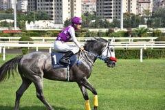 Race Horse and Jockey stock image