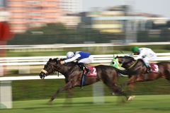 Racing Horse in Competition Motion Pan. Racehorse racing horse racing horse racing race track race track jockey paddock gambling equestrian gamble sport Stock Images