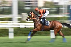 Racing Horse in Competition Motion Pan. Racehorse racing horse racing horse racing race track race track jockey paddock gambling equestrian gamble sport Stock Photography