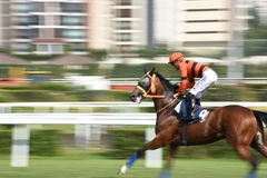 Racing Horse in Competition Motion Pan Royalty Free Stock Photography
