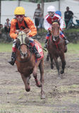 Racehorse rider collided speed in traditional horse Stock Image