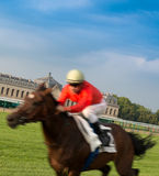 Racehorse. Running horse in a racehorse in Chantilly, France Royalty Free Stock Photos