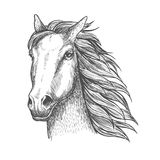 Racehorse stallion sketch for horse racing theme Royalty Free Stock Photography