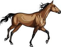 Racehorse. Vector elegant red horse galloping Royalty Free Stock Photo