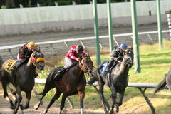 Racehorses charging. Three race horses charging for finish line Royalty Free Stock Photos