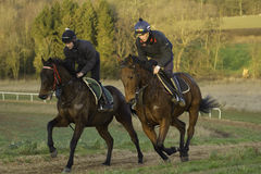 Racehorses on the gallops in Shropshire. Racehorses morning exercise on the gallops Stock Photo