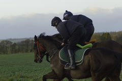 Racehorses on the gallops in Shropshire. Racehorses morning exercise on the gallops Stock Image
