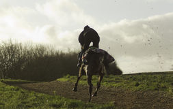 Racehorses on the gallops in Shropshire Royalty Free Stock Photography