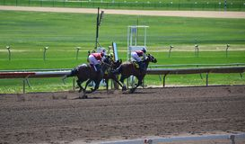 Racehorses and jockeys galloping. During races Royalty Free Stock Photo