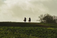 Racehorses returing from the gallops in silhouette Royalty Free Stock Photography