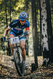 Racer cyclist rides through forest, rising in a slight slope Stock Photos