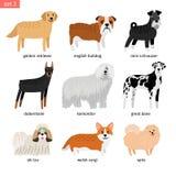 Races de chien Dirige la collection d'élevage de chiens d'isolement sur le fond blanc, le great dane et le komondor illustration libre de droits