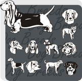 Races de chien - ensemble de vecteur Photos libres de droits