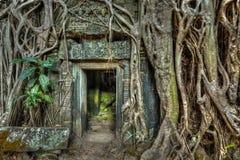 Raíces de piedra antiguas de la puerta y del árbol, templo de TA Prohm, Angkor, Camb Foto de archivo