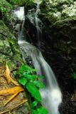 RaChaNuPharp on the waterfall Stock Photography