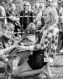 Rachel Riley che giudica un'esposizione canina sulla brughiera di Hamstead a Londra fotografie stock