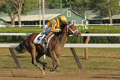 Rachels Valentina Wins The Spinaway Stakes Royaltyfria Bilder