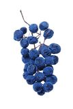 Racimo azul de la uva como pasa Imagen de archivo