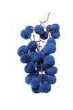 Racimo azul de la uva como pasa Foto de archivo libre de regalías