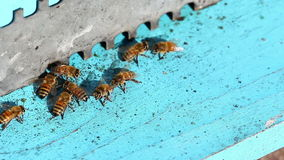 Racimo de la abeja metrajes