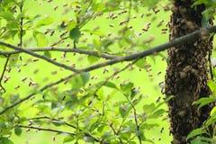 racimo de la abeja en el verano Foto de archivo libre de regalías