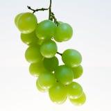 Racimo de la uva Fotografía de archivo