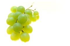 Racimo de la uva Imagen de archivo libre de regalías