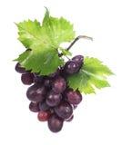 Racimo de la uva con las hojas aisladas Fotos de archivo