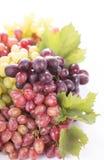 Racimo de la uva con las hojas aisladas Fotos de archivo libres de regalías