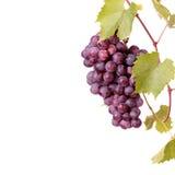 Racimo de la uva roja con las hojas Fotografía de archivo libre de regalías