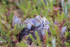 Racimo de mariposas en el pantano Fotografía de archivo