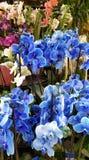 Racimo de orquídeas azules Imagen de archivo
