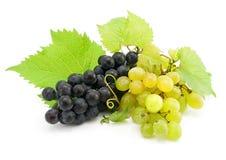 Racimo de uva verde y azul aislada en blanco Fotografía de archivo libre de regalías