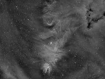 Racimo del árbol de navidad - nebulosa del cono Imagen de archivo libre de regalías