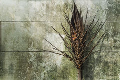 racimo del coco Fotografía de archivo libre de regalías