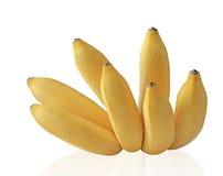 Racimo maduro del plátano del bebé Imagenes de archivo