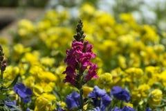 Racimo rosado de flores con el mar de flores amarillas detrás de él Imagen de archivo libre de regalías