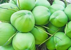 Racimos de cocos frescos Foto de archivo libre de regalías